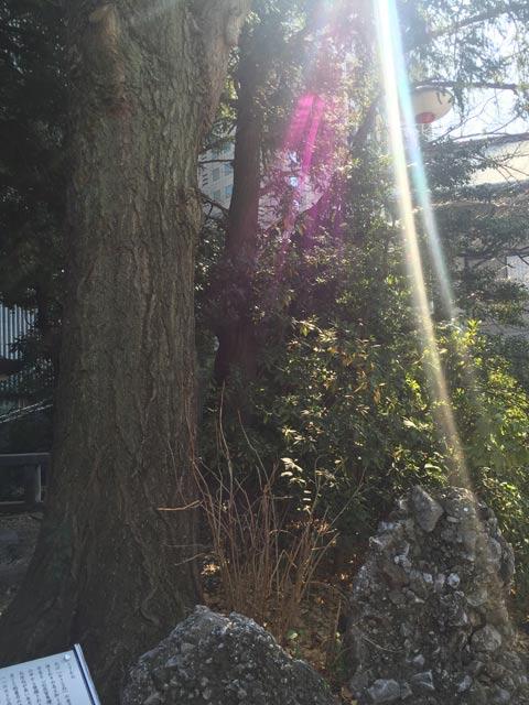 日枝神社 さざれ石