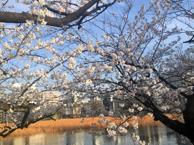 上野 恩賜(おんし)公園