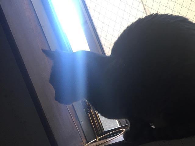 猫と青い光