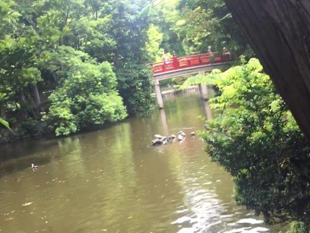 氷川神社 神池