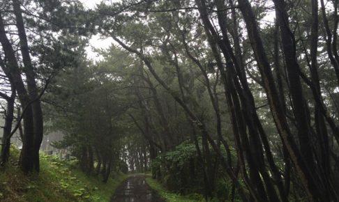 岩手 三陸海岸 松林