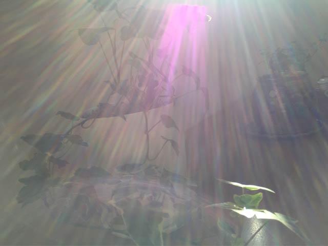 龍 七色の光