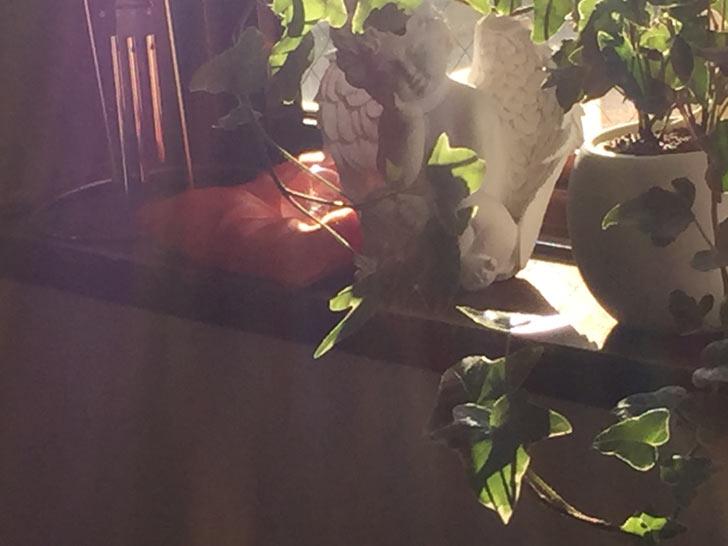 ある日突然に「開く」光の扉
