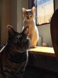 光写真 猫