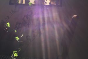 紫 光 写真