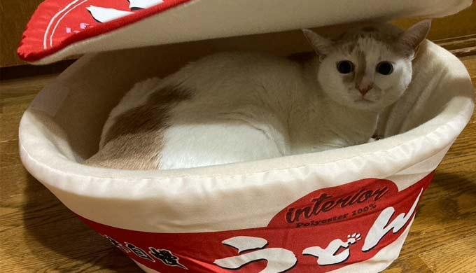 猫どんべい布団